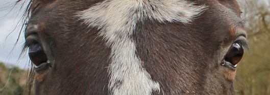 171114 8 Horse