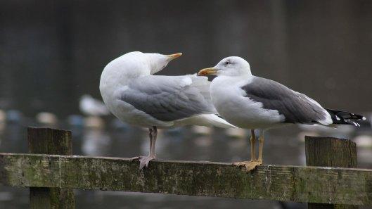 171116 gull chat (4)