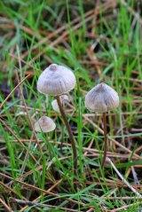 171117 fungi (14)