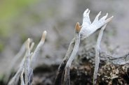 171117 fungi (3)