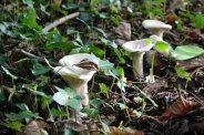 171117 fungi (4)