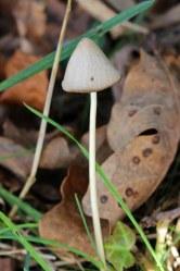 171117 fungi (5)
