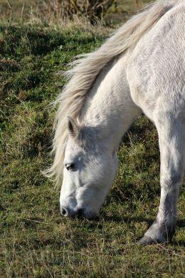 171120 Dawlish warren ponies (1)