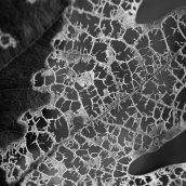 171128 leaf skeletons (3)