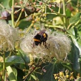 171202 bumblebee