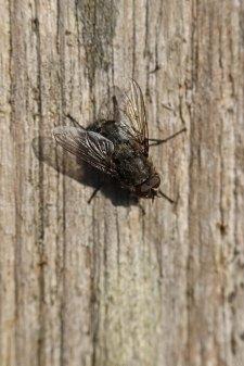 171202 fly (1)