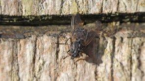 171202 fly (2)