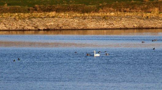 171205 Rhaslas Pond (6)