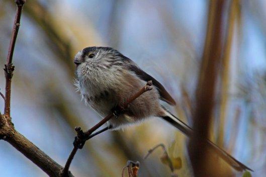 171207 Forest farm birds (1)
