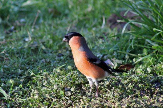 171207 Forest farm birds (2)