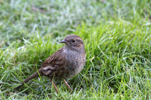 171207 Forest farm birds (3)