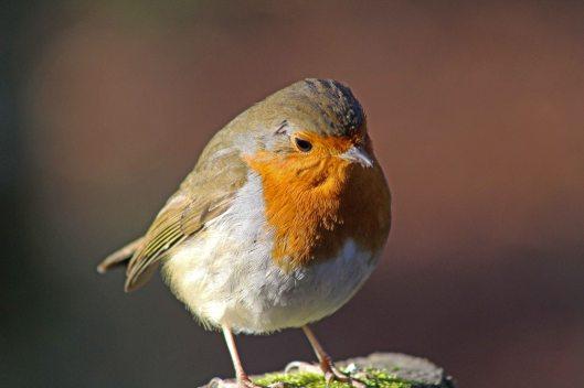 171207 Forest farm birds (4)