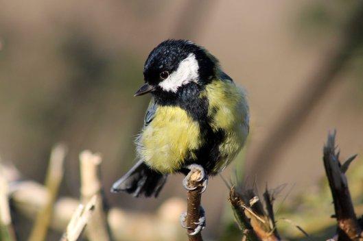 171207 Forest farm birds (5)