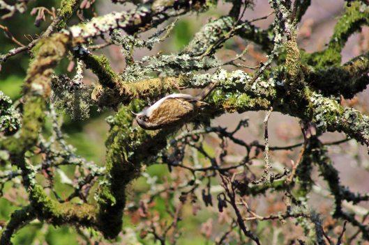 171207 Forest farm birds (6)