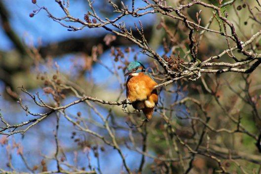 171207 Forest farm birds (7)
