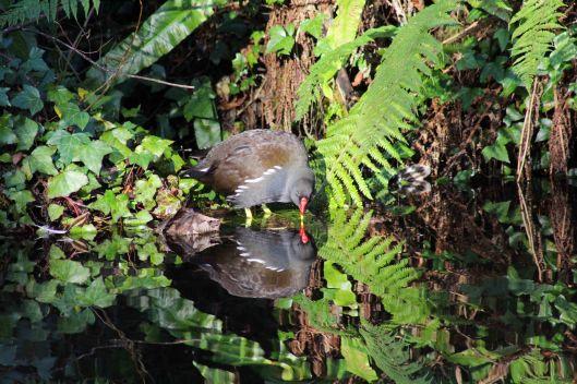 171207 Forest farm birds (8)
