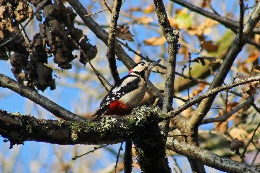 171207 Forest farm birds (9)