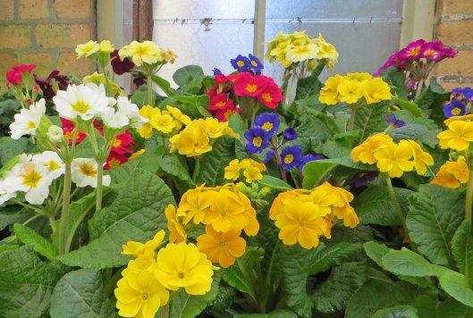171208 Auckland Wintergarden flowers (1)