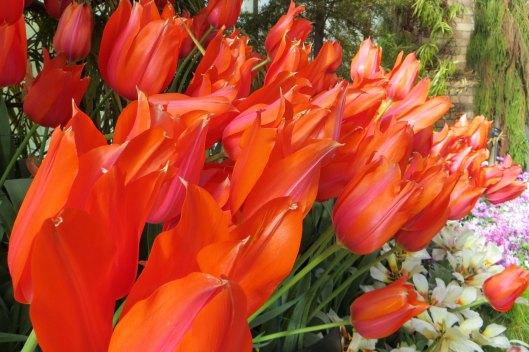 171208 Auckland Wintergarden flowers (2)