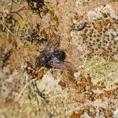 171211 lichens and bryophytes (6)