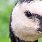 171216 birds' eyes (1)