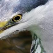 171216 birds' eyes (10)