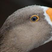 171216 birds' eyes (11)