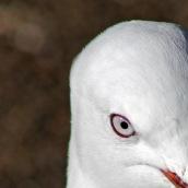 171216 birds' eyes (12)