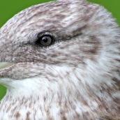 171216 birds' eyes (13)