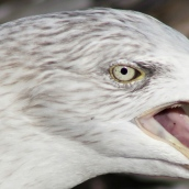 171216 birds' eyes (14)