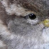 171216 birds' eyes (15)