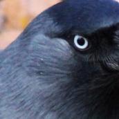 171216 birds' eyes (16)