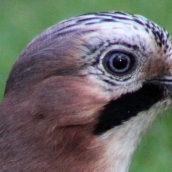 171216 birds' eyes (17)