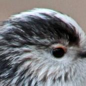 171216 birds' eyes (18)