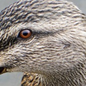 171216 birds' eyes (19)