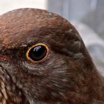 171216 birds' eyes (2)