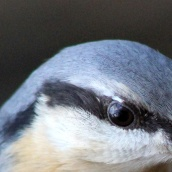 171216 birds' eyes (21)
