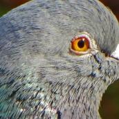 171216 birds' eyes (22)