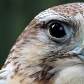 171216 birds' eyes (24)