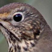 171216 birds' eyes (25)