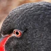 171216 birds' eyes (26)