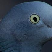 171216 birds' eyes (27)