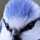 171216 birds' eyes (3)