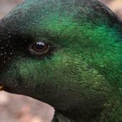 171216 birds' eyes (6)