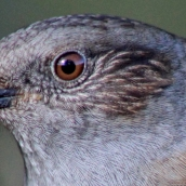 171216 birds' eyes (7)