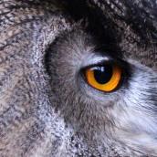 171216 birds' eyes (8)