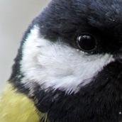 171216 birds' eyes (9)