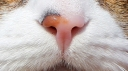 171219 nose (1)