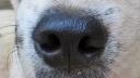 171219 nose (4)