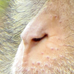 171219 nose (8)